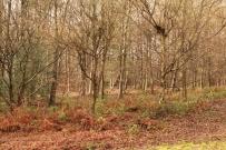 Woods-Naked (35)